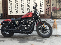 Harley Davidson Iron 883 2019 Model